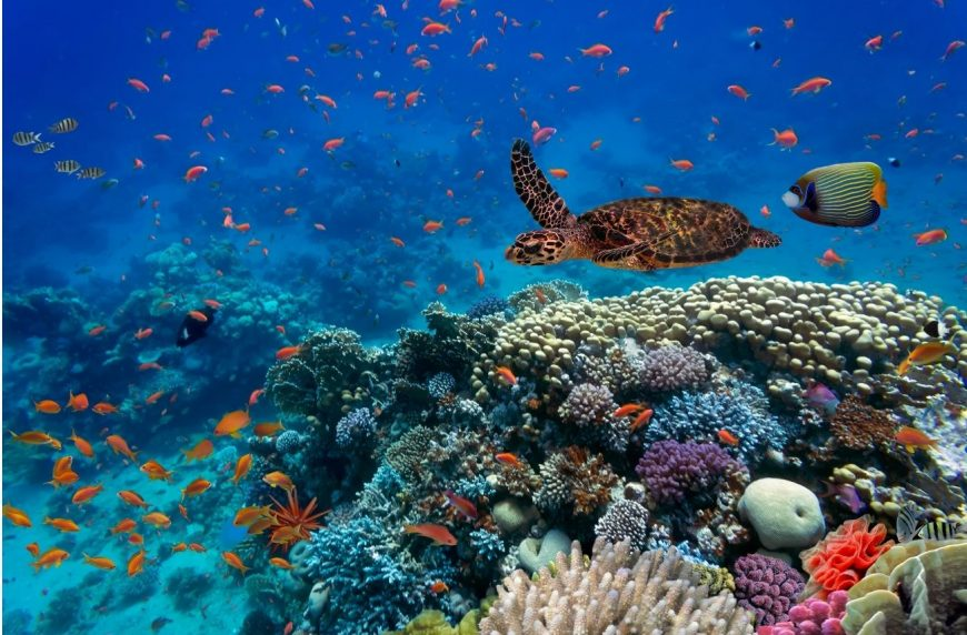 Healthy Reef And Turtle